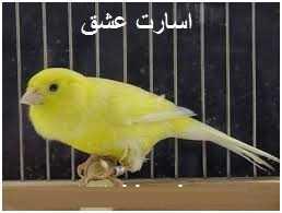 دانلود pdf کتاب  داستان اسارت عشق  محمد ابو القاسمی رایگان