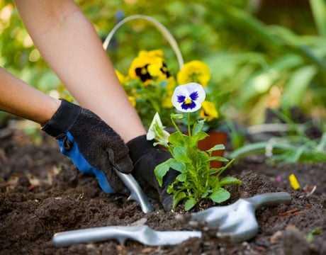 دانلود pdf کتاب کاشت و پرورش بادام زمینی رایگان